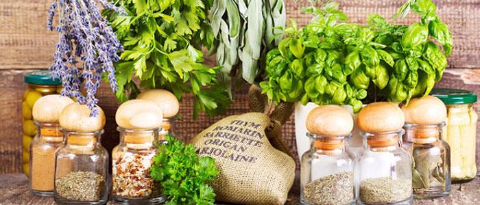 Kräuter & Salatkräuter