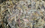 Aloe Vera Wellness Tee